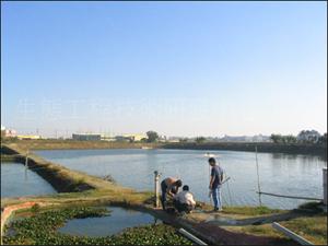 室外養蝦水質淨化研究計畫的研究生監測水質 (國科會補助嘉南藥理科技大學研究計畫)