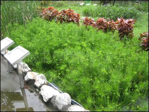 台南市白河國小人工濕地(教育部環保小組永續校園計畫)