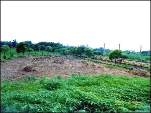 慈濟大林醫院污水廠放流水三級處理與再利用的生態技術-場址設置前(慈濟基金會產學合作計畫)