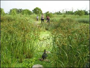 慈濟大林醫院污水廠放流水三級處理與再利用的生態技術-泰國學者來訪(慈濟基金會產學合作計畫)