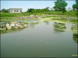 慈濟大林醫院污水廠放流水三級處理與再利用的生態技術-除了可淨化水質,更可進一步營造水環境景觀(慈濟基金會產學合作計畫)