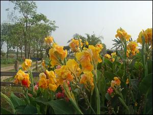雨水回收再利用的生態處理技術-雨水花園