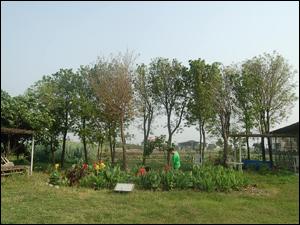 雨水回收再利用的生態處理技術-雨水花園(SSF濕地)