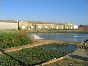 自然淨水技術生態材料實際應用案例:循環水養殖系統