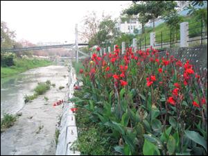 自然淨水技術生態材料實際應用案例:在槽式污染性河水自然淨化系統