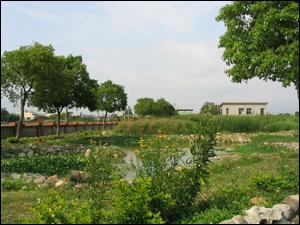 自然淨水技術生態材料實際應用案例:大林慈濟醫院污水處理廠人工濕地
