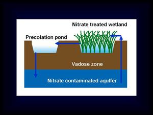 地下水硝酸鹽污染整治的生態技術概念圖