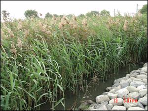 高植被覆蓋率FWS濕地