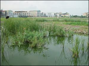 中植被覆蓋率FWS濕地