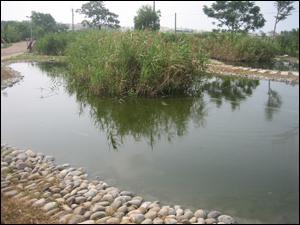 低值被覆蓋率FWS濕地