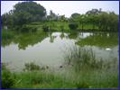 農村社區污水處理的生態技術