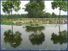 污水廠放流水三級處理與再利用的生態技術