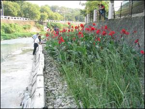台南市竹溪在槽式人工濕地研究計畫(環保署補助研究計畫)-場址設置後