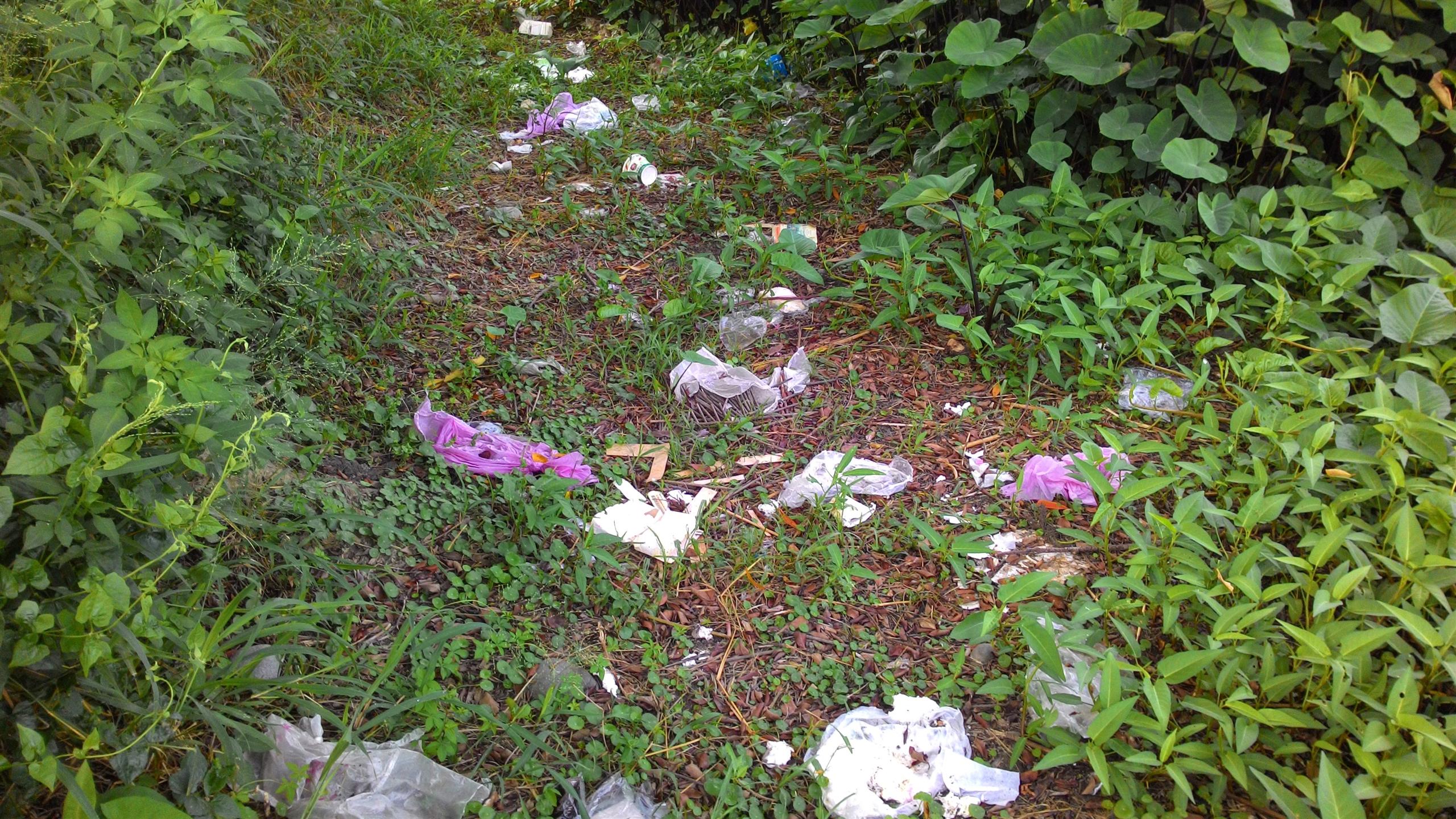 被丟了滿地垃圾的SSF濕地周圍步道